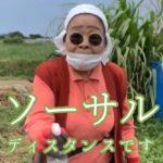 南国で島らっきょう収穫するお婆ちゃんがおもろい!お勧めらっきょうレシピもご紹介!